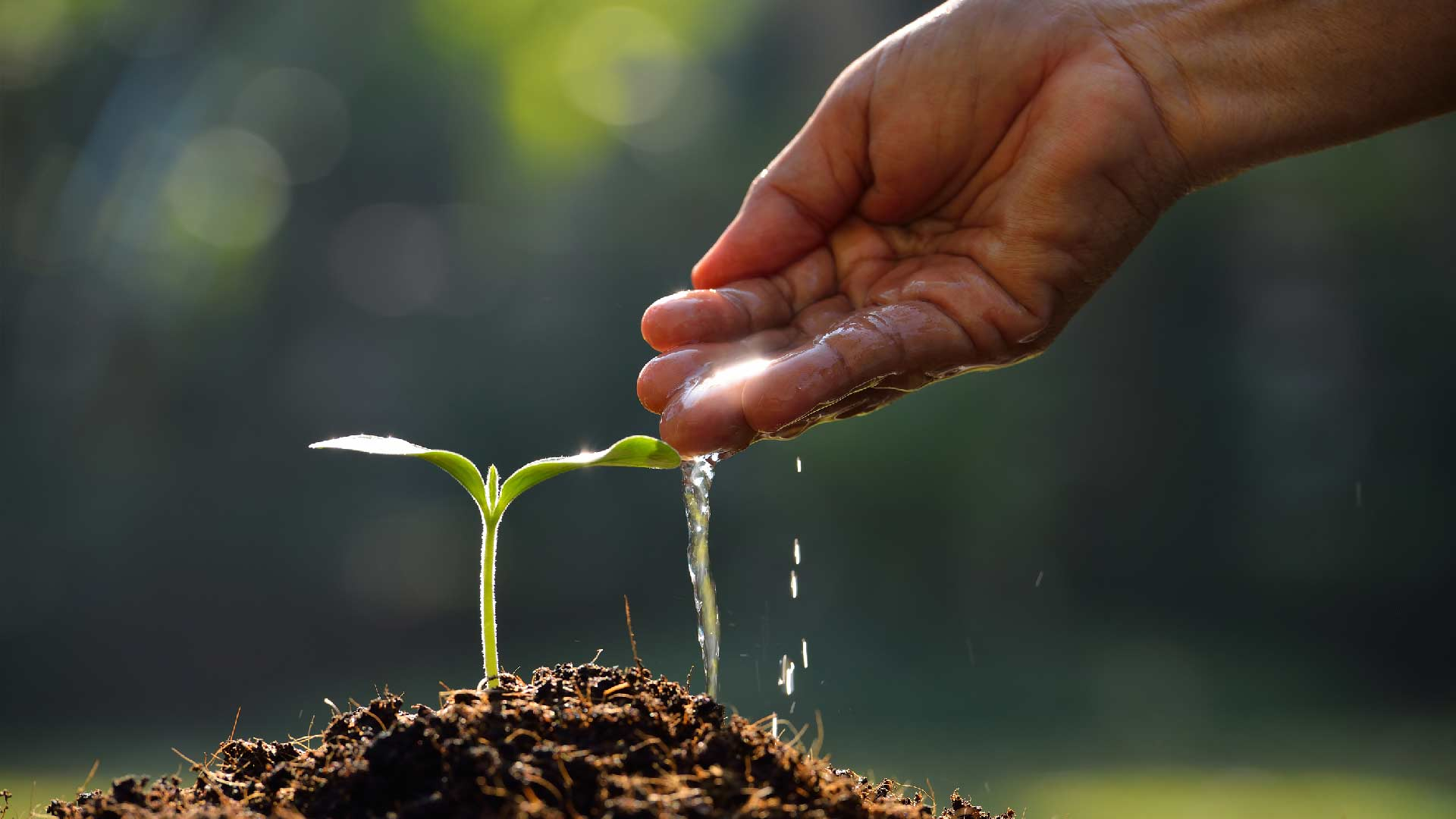 an analysis of the ideal soil for growing plants