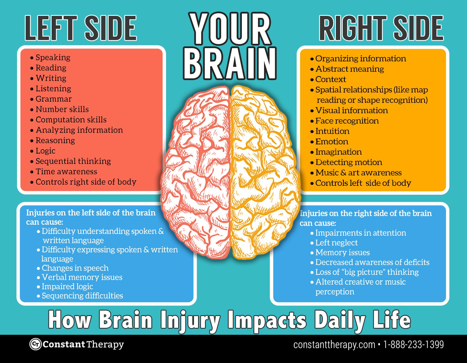 the differences between the left and the right hemispheres of the brain
